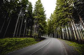 جنگل آسفالت